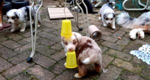 Abc Dog Team Puppy Adventure Experience