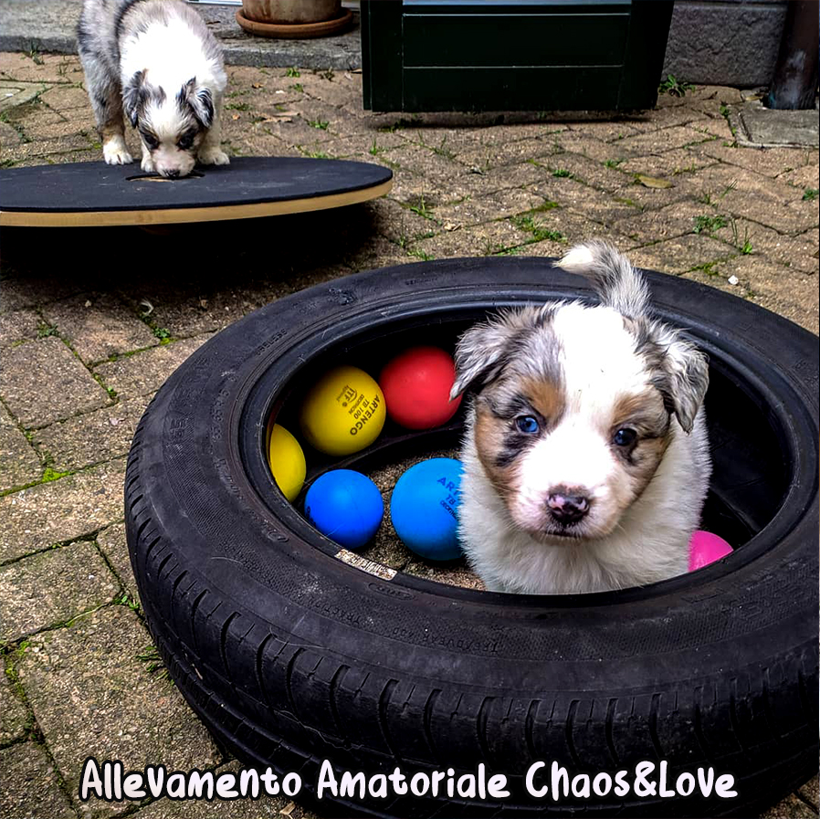 ABC DOG TEAM MONZA PUPPY ADVENTURE EXPERIENCE