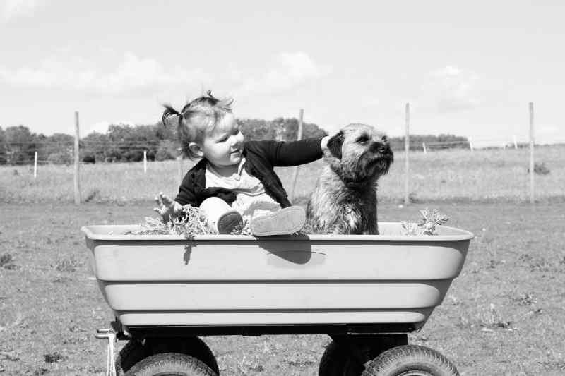 Mamma voglio un cane: consigli e considerazioni utili