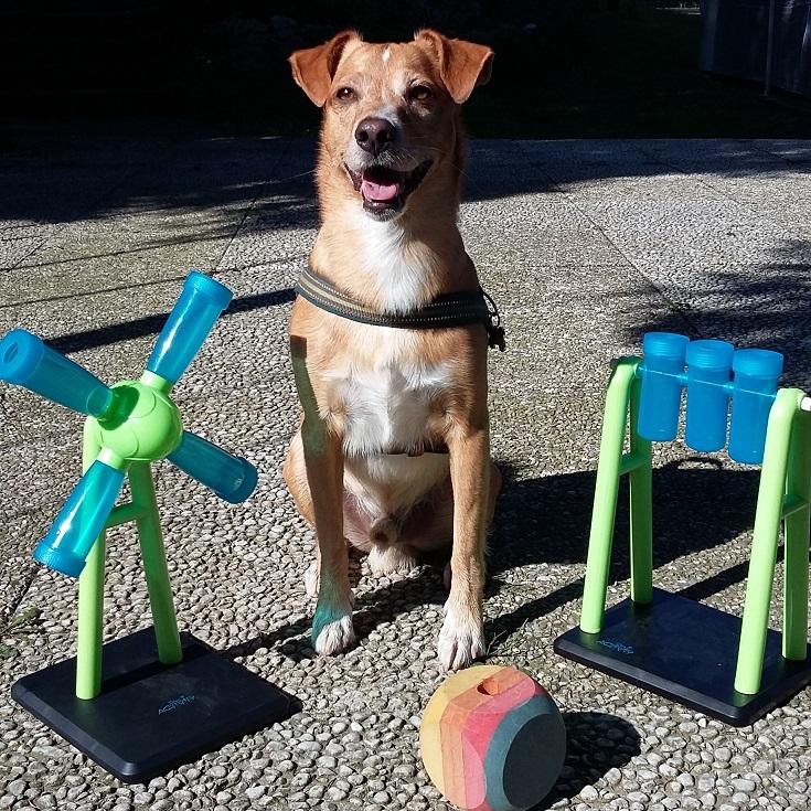 ABC DOG attivazione mentale